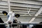 農舎用扇風機