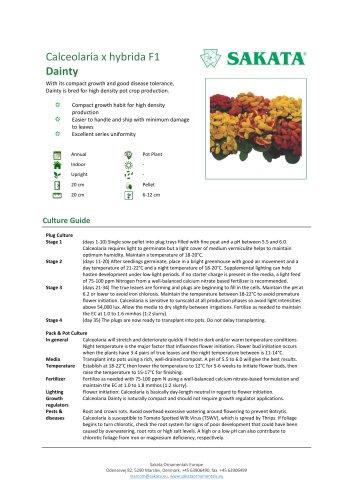 DAINTY Calceolaria x hybrida F1