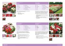 Flower Catalogue 2017-2018 SEED - 11