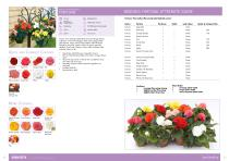 Flower Catalogue 2017-2018 SEED - 12