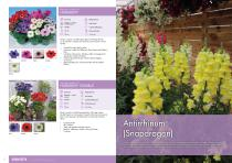 Flower Catalogue 2017-2018 SEED - 7