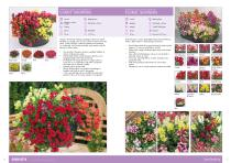 Flower Catalogue 2017-2018 SEED - 8
