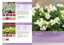 Flower Catalogue 2017-2018 SEED - 9
