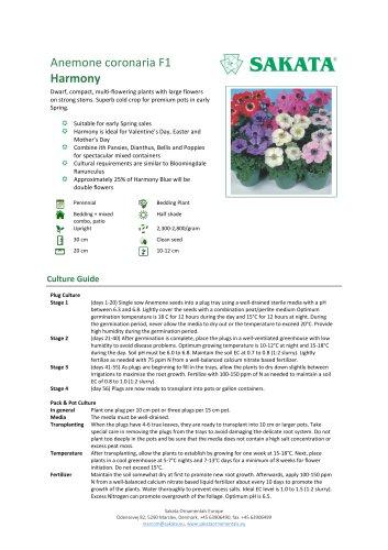 HARMONY Anemone coronaria F1