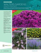 2021 Darwin Perennials Catalog (Star Roses & Plants) - 4