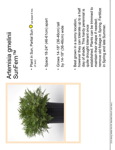 Artemisia gmelinii SunFern™