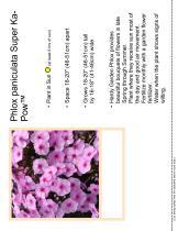 Phlox paniculata Super Ka-Pow™