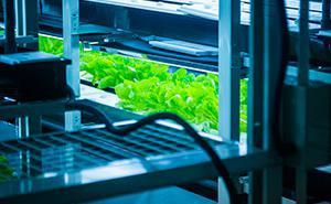 Máquinas para horticultura