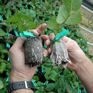substrato de cultivo rejeitos de coco
