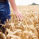 software de alimentação / de gestão de vacas leiteiras / de gestão / de gestão de dados